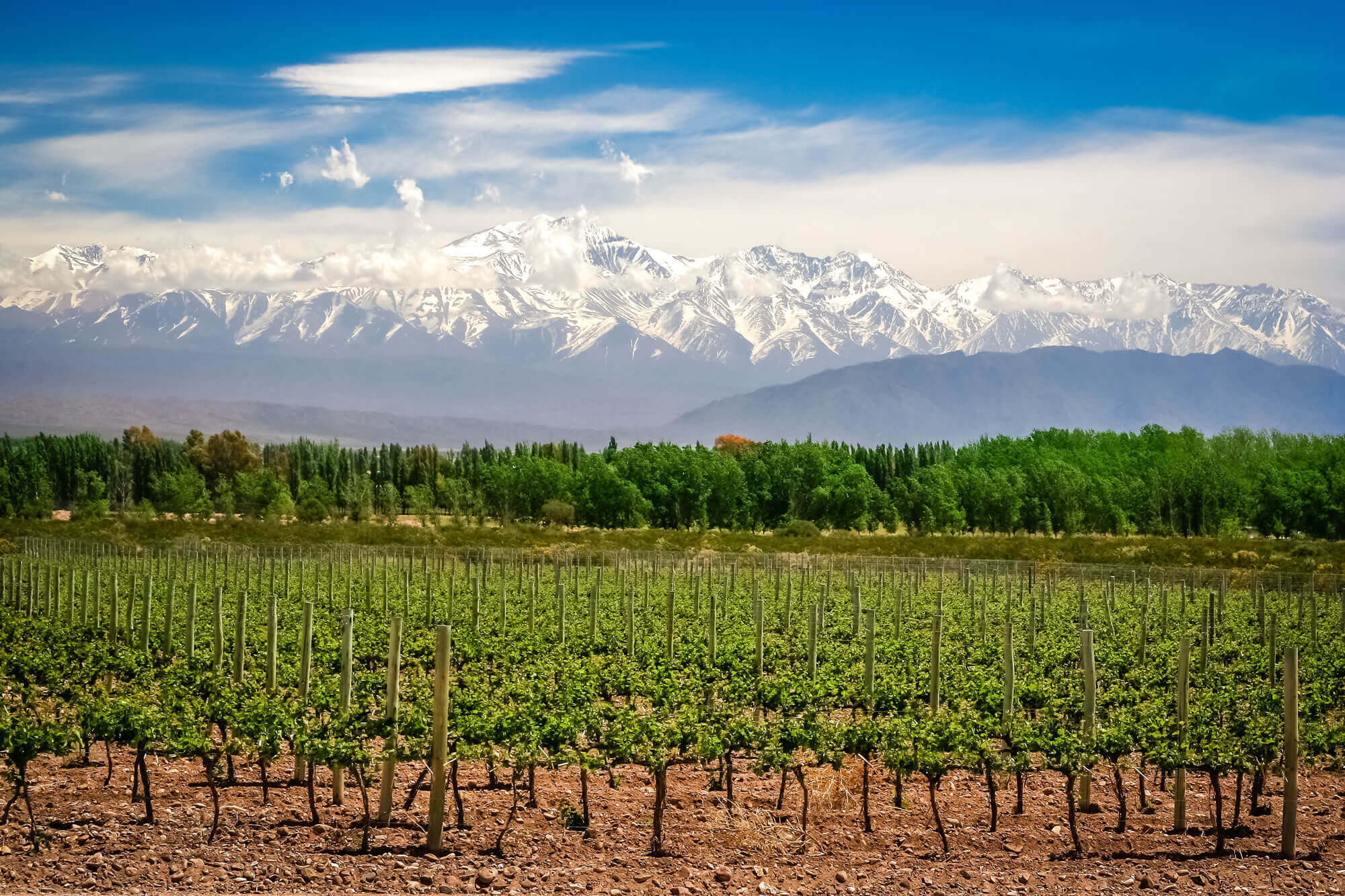 Organic vineyards Mendoza, Argentina