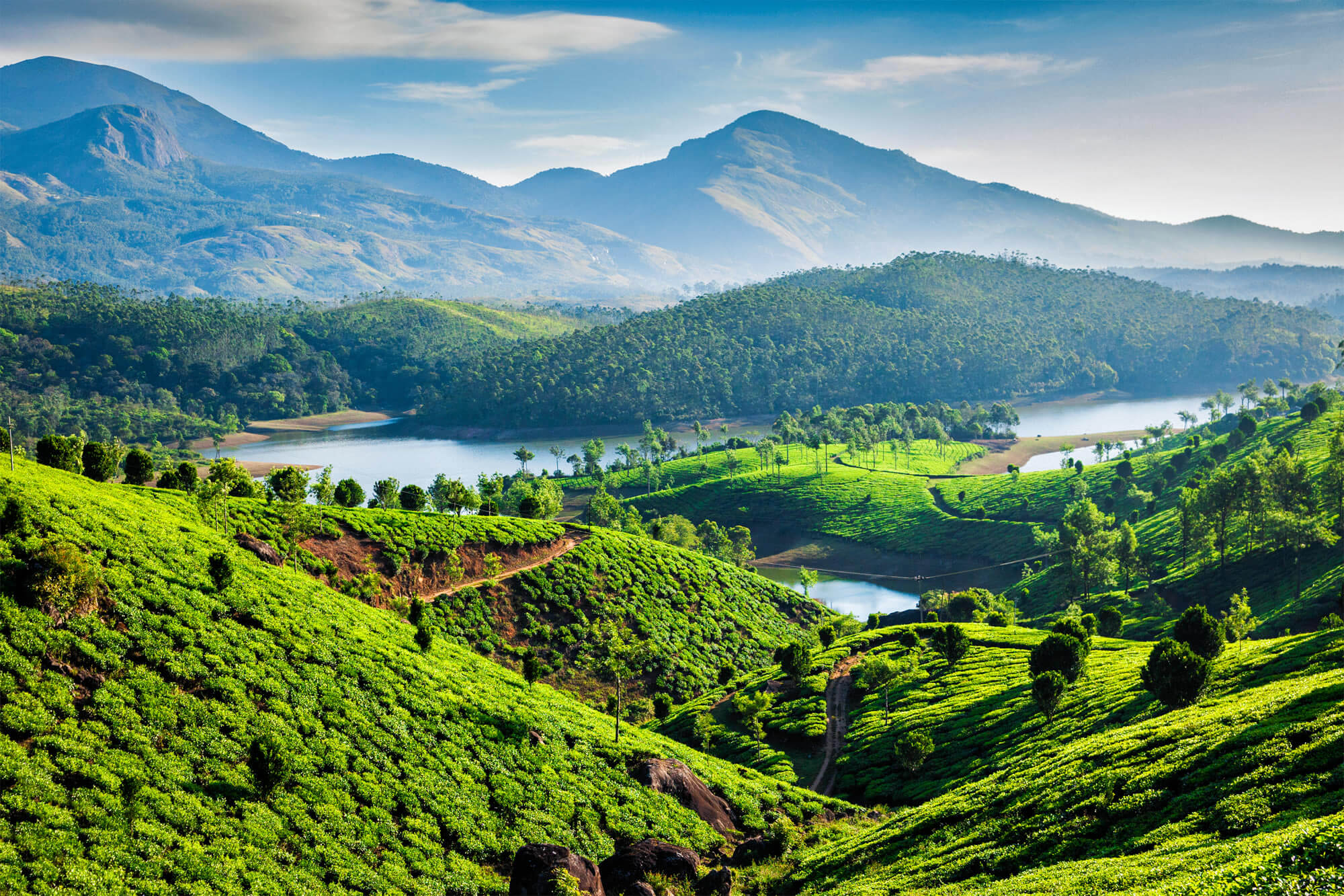 Tea Plantations and Muthirappuzhayar River, India