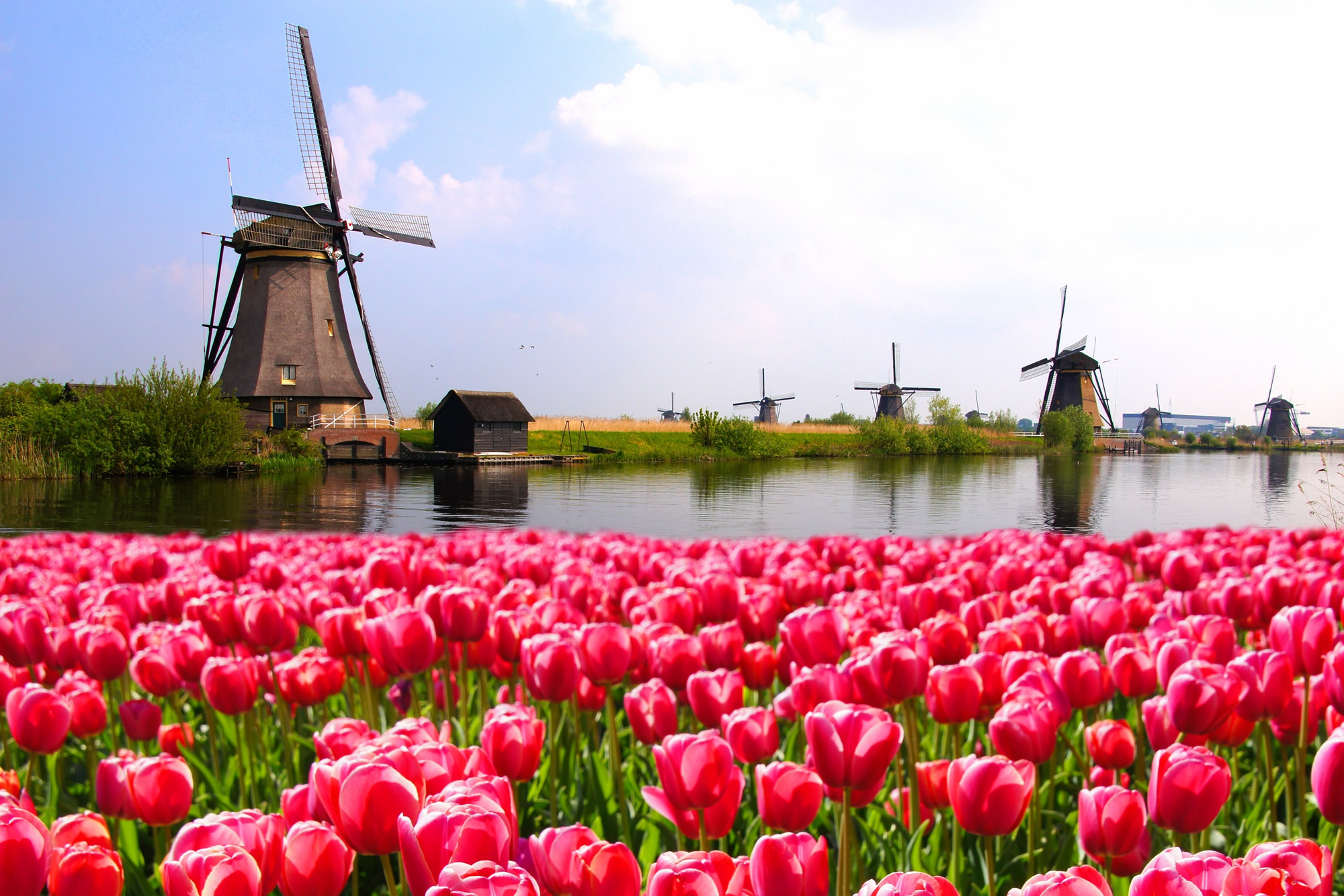 Colorful Netherlands Map