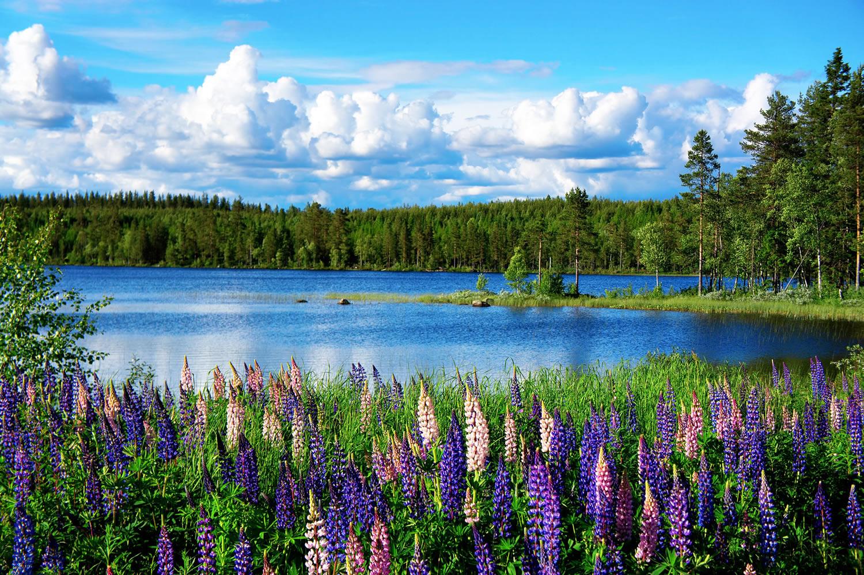 Scandinavian summer landscape, Sweden
